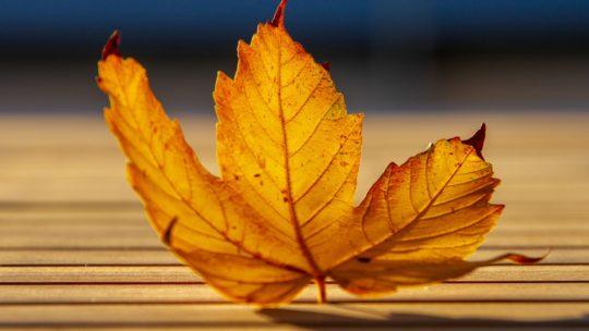 Высказывания об осени в стихах